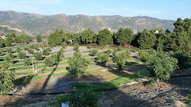 Water Reuse Provides Cost Savings to City, Avocado Farmers teaser image